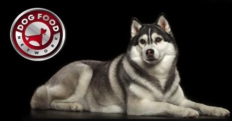 The Best Dog Food For A Siberian Husky 2019 Dog Food Network